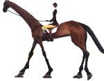 ilustrační obrázek koně