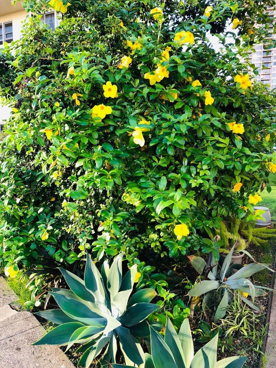Marina Gardensの植物