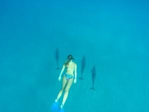 Schnorcheln mit Delfinen