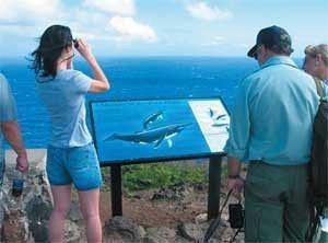 Wale beobachten in Hawaii