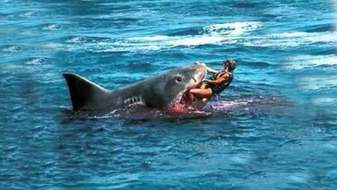 Hai Angriffe in Hawaii – Wie viele Hai Attacken gibt es in Hawaii?