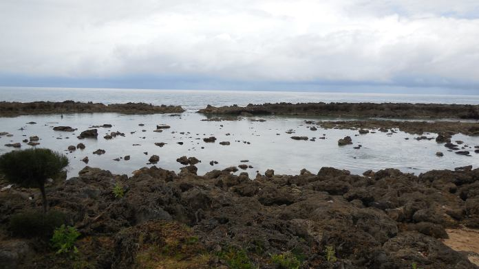 Sharks Cove – Der beste Schnorchel Spot an der Northshore