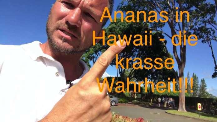 Dole Ananas Plantage Hawaii – die Wahrheit über Ananas in Hawaii