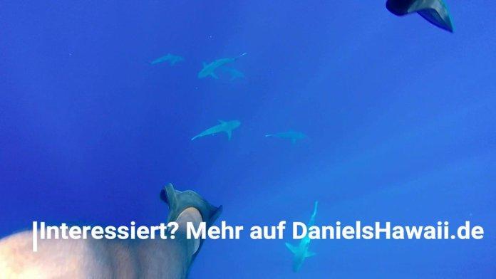Hai Tauchen in Hawaii – Test Tauchen mit Haien