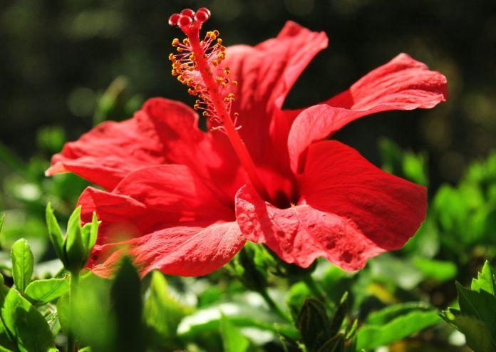 Botanische Gärten auf Maui