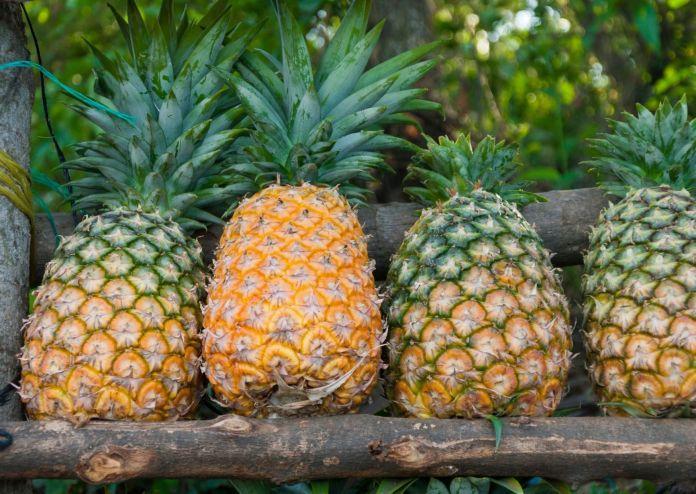 DOLE: Ananas auf Oahu