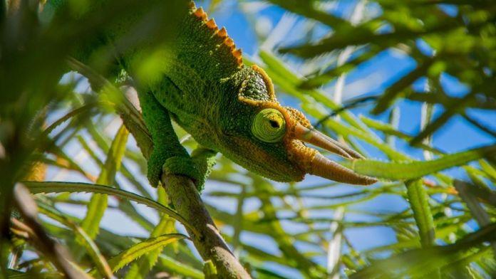 Tierwelt in Hawaii – wilde Tiere?