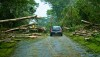 A car makes its way up Makuu Drive in Hawaiian Paradise Park after crews and volunteers cut a path through fallen trees brought down from Tropical Storm Iselle. Photography by Baron Sekiya   Hawaii 24/7