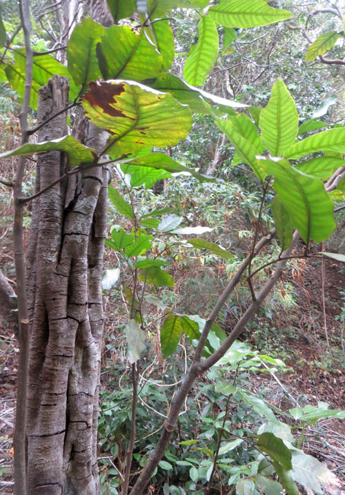 And Hawaiian Animals Plants Native