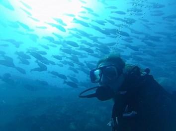 Emma Reed, University of Arizona, cruises on the SS Yongala to Australiaʻs Great Barrier Reef
