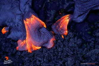 Molten lava covers an old 'a'a field and kupukupu ferns that were just becoming established on the desolate terrain.