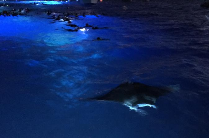 Guaranteed Manta Ray Night Snorkel on Hawaii