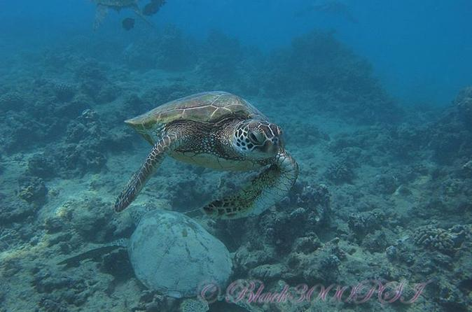 Introduction to Scuba Diving in Oahu from Waikiki on Oahu