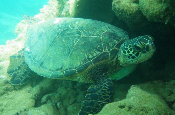 SeaFun Snorkel on Kauai