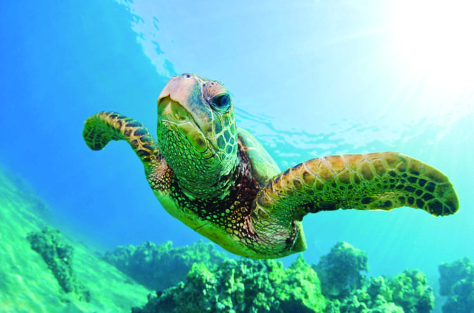 Turtle Canyon Snorkel Cruise by Catamaran on Oahu