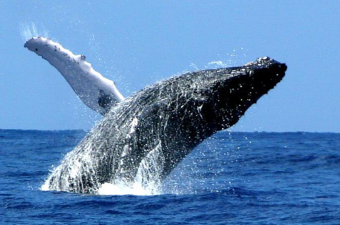 Whale Watch Cruise by Zodiac from Kauai