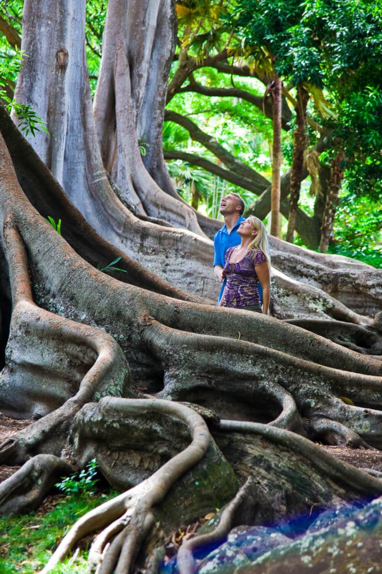 Top 25 Things to do in Poipu, Kauai featured by top Hawaii blog, Hawaii Travel with Kids: The National Tropical Botanical Garden on Kauai is a fun thing to do on Kauai with kids