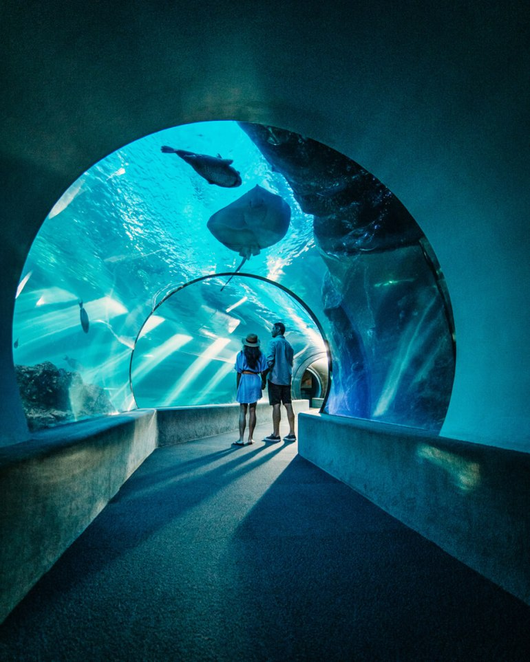 The Maui Ocean Center is one of the top Maui attractions for families. Image of a couple standing in an aquarium tunnel.
