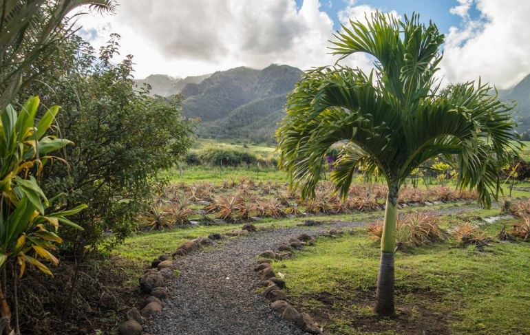 50 Best Places to Visit in Hawaii with your Family featured by top Hawaii blog, Hawaii Travel with Kids: Scenic plants and trees at Maui Tropical Plantation.