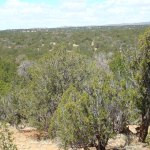 100 Acres Borders Cibola Forest