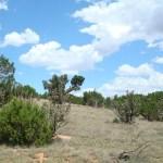 48 Acres Views Property
