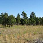 Mountain Land 7.5 Acres
