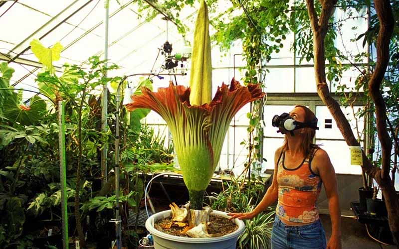 Интересные факты о стебле растений