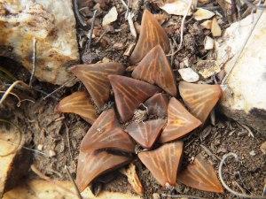 Fig. 109 7967 Spitzkop (quartz rock)