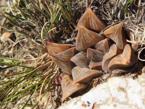 Fig. 122 7967 Spitzkop (quartz rock)