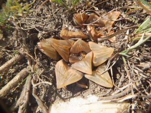Fig. 125 7967 Spitzkop (quartz rock)