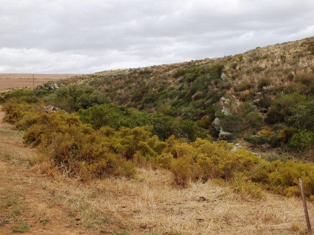 Fig. 131 - 7953 N Klipbankskloof westward view of habitat