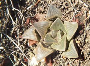 Fig. 134 7967 Spitzkop (quartz rock)
