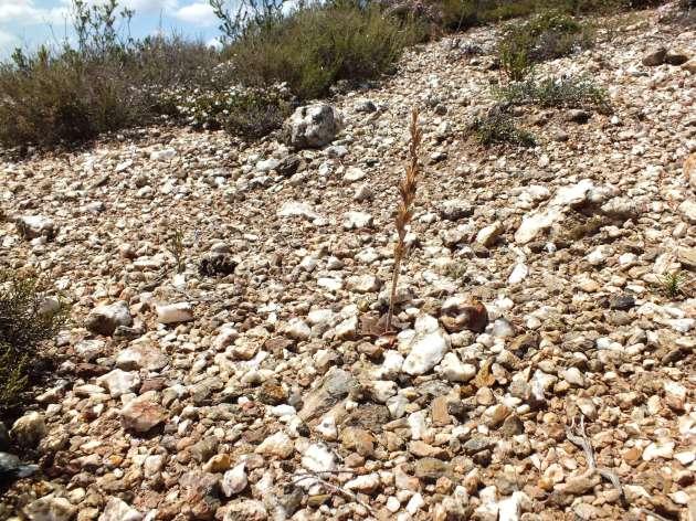 Pebbles and plants present