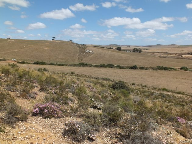 Looking to the previous habitat of larger quartz rock