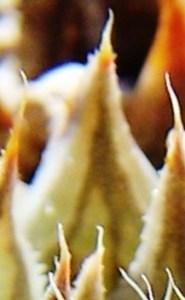 MBB7526.7 - leaf face