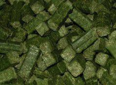 Hay-Rite Alfalfa Cubes