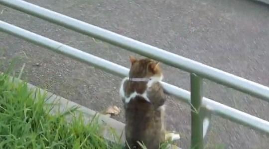 Yugure cat20120914