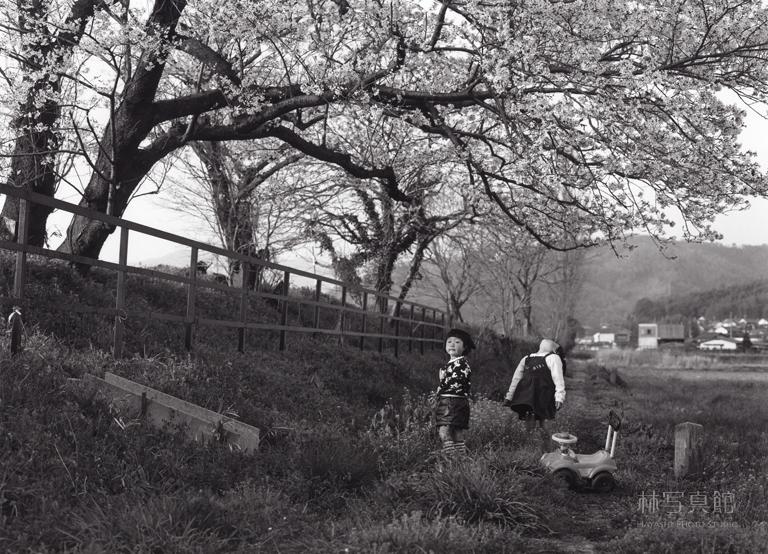 いつみきとてか | 線路沿いの桜1995
