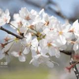 春を撮るならこんな撮り方もありかな?