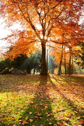 munich tree