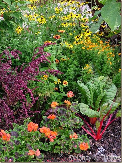 Pelargonium Black Velvet Scarlet Chard Tagetes Starfire Rudbeckia fulgida fulgida Atriplex mid August 05