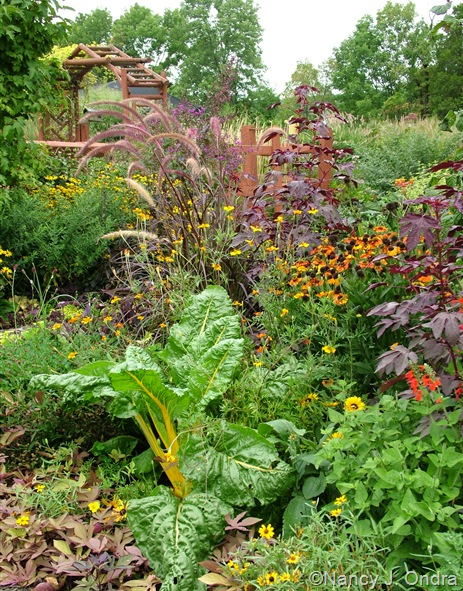 'Bright Lights' Swiss chard with Helenium 'Mardi Gras' and Hibiscus acetosella 'Red Shield' Aug 14 10