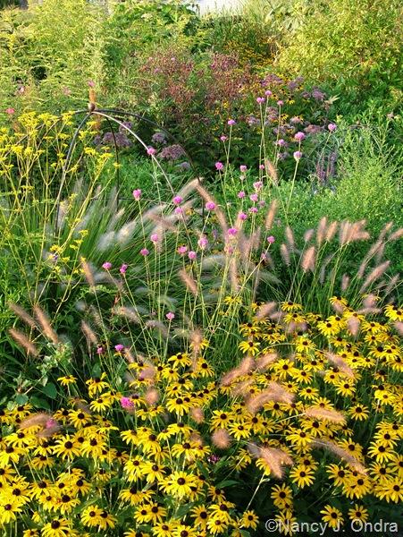 Gomphrena 'Fireworks' with Pennisetum alopecuroides 'Cassian', Patrinia scabiosifolia, and Rudbeckia fulgida var. fulgida Aug 31 10