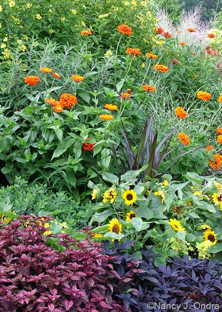Helianthus 'Lemon Queen', Zinnia 'Aztec Orange', Pennisetum purpureum 'Princess', Helianthus annuus 'Sunny Smile', Hypoestes 'Red Splash Select', and Ipomoea batatas 'Sweet Caroline Purple'