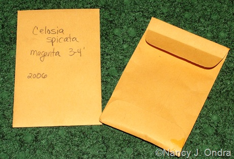 Brown Kraft Coin Envelopes
