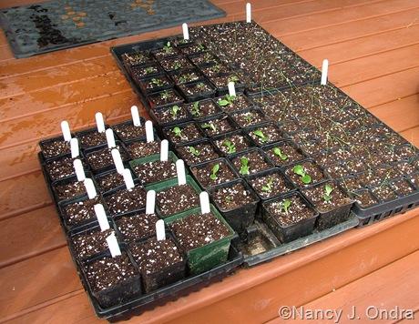 Sown seeds and seedlings