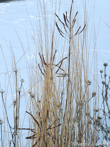 Veronicastrum 'Temptation' with Calamagrostis x acutiflora 'Stricta' in snow