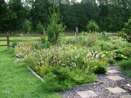 Perennial meadow in Cottage Garden at Hayefield Aug 24 11