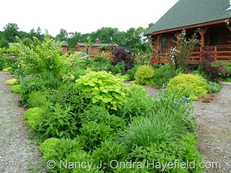 The Front Garden at Hayefield (June 2011)