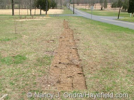 The Long Border at Hayefield (April 8, 2008)
